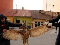 Puhu kuşu, elektrik akımına kapılarak öldü