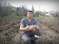 Çemişgezek toprağının patates sınavı