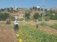Mardinli iki kız kardeş tarım yaparak geçimlerini sağlıyor