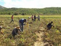 Belediye ve köylülerin ektiği fasulyenin hasadı başladı VİDEO HABER