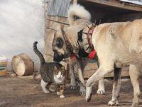 Kangallar ile kedilerin şaşırtan dostluğu