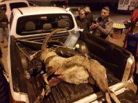 Yaban keçisini avlayanlar yakalandı