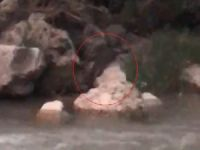 Kaymakam, koruma altındaki su samurunu görüntüledi