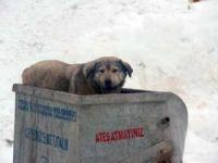 Sokak köpeğinin yiyecek bulma mücadelesi