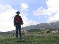 Çobanların zorlu mesaisi başladı