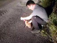 AFAD ekipleri, hayvanlar için de seferber oldu