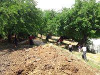 Asırlık dut ağaçlarından lezzetli pekmez üretiliyor