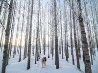 Kırağı tutan ağaçların görsel şöleni