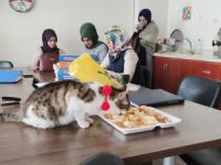 Öğretmenlerin bitki halde bulduğu kedi, iyileşti okulun maskotu oldu