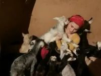Oğlak ve kuzuların sevgi gösterisi VİDEO
