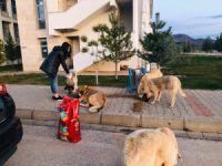 Gençlerden  sokak hayvanları için duyarlı davranış