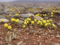 Baharın habercisi kar çiçeklerinin göz alıcı güzelliği