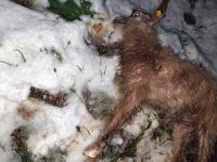 Kar yağışı, küçükbaş hayvanları telef etti