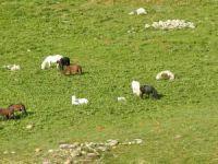 Munzur Dağları'nda yılkı atları görüntülendi