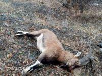 Dağ keçisi vuran katillere ceza