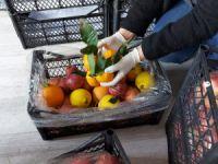 Dersim Belediyesi'nden 1300 haneye sebze ve meyve yardımı