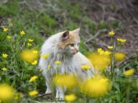 Munzur Vadisi Milli Parkı baharın müjdecisi çiçeklerle renklendi
