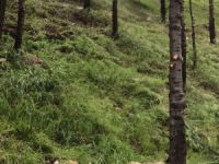 Dersim Barosu'ndan Tahir Elçi Barış Ormanı'na ağaç dikimi