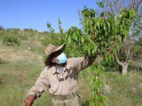 Robinson Ziya dedenin adası baharla birlikte yeşile büründü