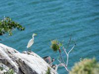 Keban Baraj Gölü'ndeki adalar yumurtadan çıkan yavru göçmen kuşlarla şenlendi