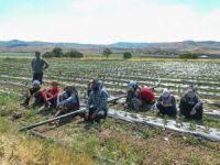 Mevsimlik işçiler aşıya gidemeyince sağlık ekipleri tarlaya indi