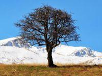 Yüksek kesimlere kar düştü