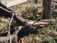 Kazada refüje çıkan otomobil ağaçlara çarparak durabildi: 2 yaralı