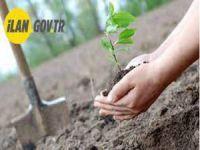 Fidan dikimi ve tohum dikim hizmeti alınacaktır