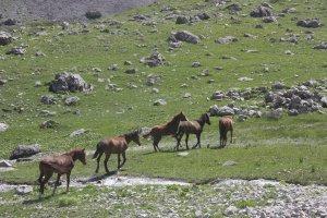 bahar-geldi,-atlar-dogaya-cikti-(3).jpg