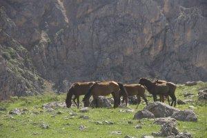 bahar-geldi,-atlar-dogaya-cikti-(5).jpg
