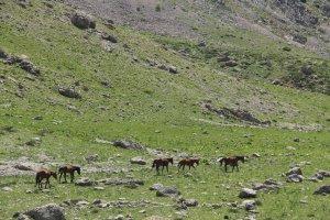 bahar-geldi,-atlar-dogaya-cikti-(6).jpg