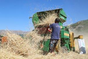 organik-tohumlar-yok-olmasin-diye-uretimi-yapiliyor-(4).jpg