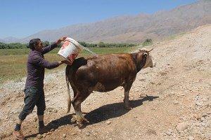 zehirlenen-inekler-icin-seferber-oldu-(4).jpg