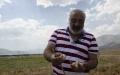 Munzur Dağ Sarımsağını tarlasında yetiştiriyor