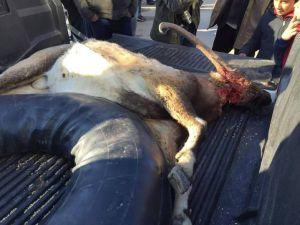 Avlanması Yasak Dağ Keçisini Vuran Avcılara, 15 Bin Lira Ceza